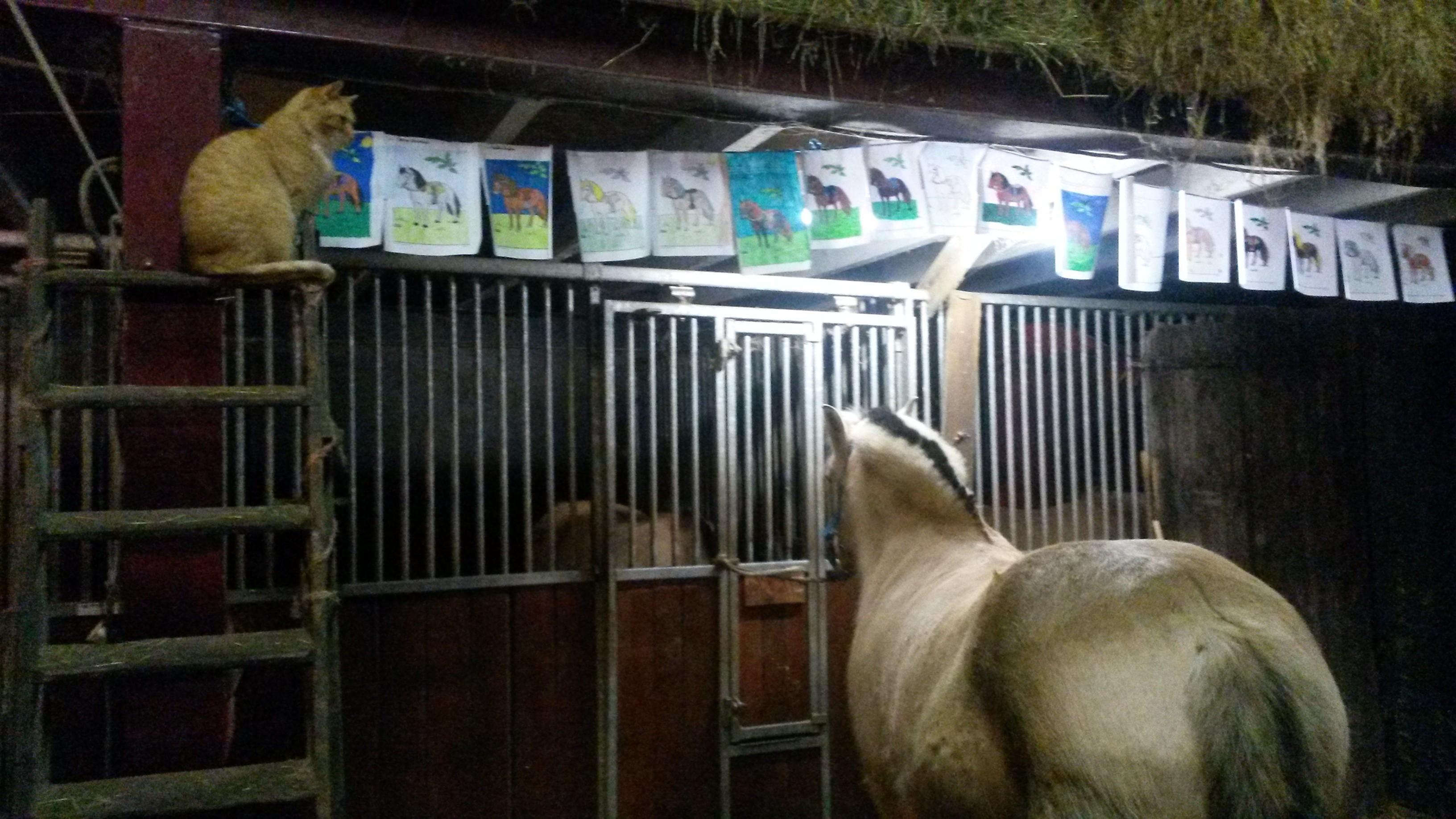 Luxury Kleurplaat Galopperend Paard Kleurplaten